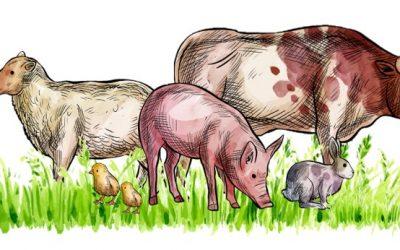 Certificación en Bienestar Animal Welfair